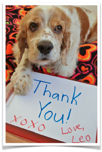 Lifeline 4 Paws Thank You